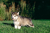 PUP 02 RK0077 10