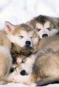 PUP 02 LS0001 01