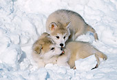 PUP 02 LS0003 01