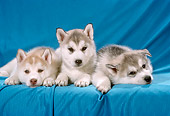 PUP 02 RC0001 01
