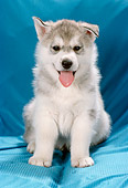 PUP 02 RC0002 01