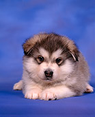 PUP 02 RK0002 03