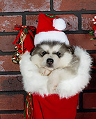 PUP 02 RK0013 02