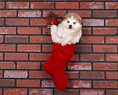 PUP 02 RK0014 01