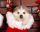 PUP 02 RK0016 01