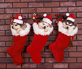 PUP 02 RK0018 06