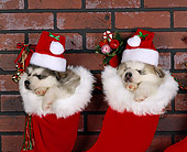 PUP 02 RK0019 01