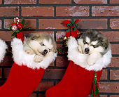 PUP 02 RK0020 01