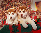 PUP 02 RK0033 02