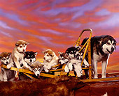 PUP 02 RK0042 11
