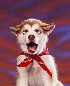PUP 02 RK0045 02