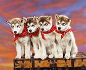 PUP 02 RK0048 04