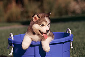 PUP 02 RK0061 02