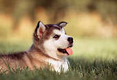 PUP 02 RK0074 04
