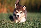 PUP 02 RK0077 09