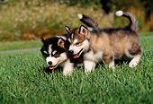 PUP 02 RK0080 02