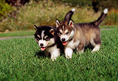 PUP 02 RK0080 10