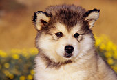 PUP 02 RK0081 01