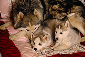PUP 02 RK0123 05
