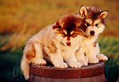 PUP 02 RK0135 06