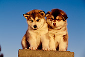 PUP 02 RK0136 04