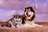 PUP 02 RK0149 03