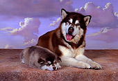 PUP 02 RK0149 16