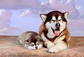 PUP 02 RK0149 20