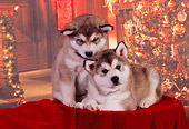 PUP 02 RK0150 01