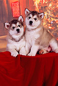 PUP 02 RK0151 01
