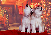 PUP 02 RK0151 04