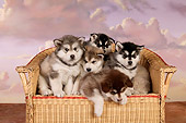 PUP 02 RK0155 01