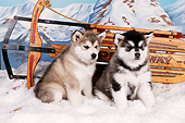 PUP 02 RK0156 01
