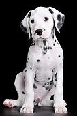 PUP 03 AC0001 01