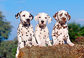 PUP 03 CB0001 01