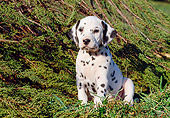 PUP 03 CB0005 01