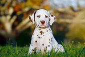 PUP 03 CB0007 01