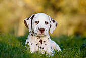PUP 03 CB0013 01