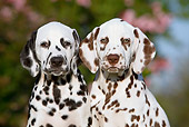 PUP 03 CB0016 01