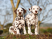PUP 03 CB0029 01