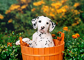 PUP 03 FA0020 01