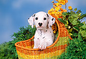 PUP 03 FA0021 01