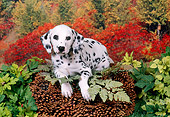 PUP 03 FA0022 01
