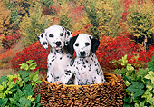 PUP 03 FA0023 01