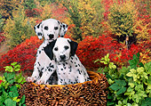 PUP 03 FA0024 01