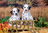 PUP 03 FA0025 01