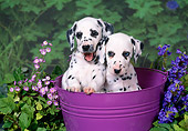 PUP 03 FA0030 01
