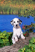 PUP 03 FA0031 01