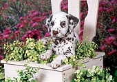 PUP 03 FA0033 01