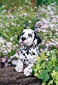 PUP 03 FA0034 01